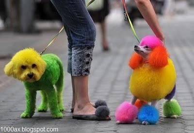 عکس قشنگی از پیوند سگ با مداد رنگی
